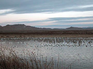 Early morning at Bosque del Apache NWR, New Mexico