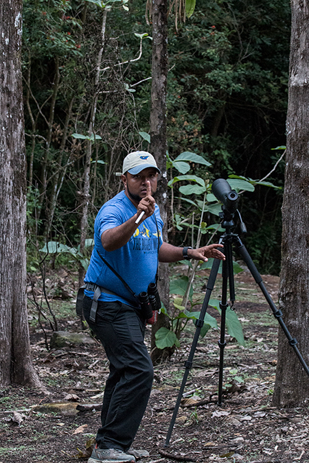 Our Guide, Carlos Bethancourt, Finding the Spectacled Owl, Hannibel's, Panama