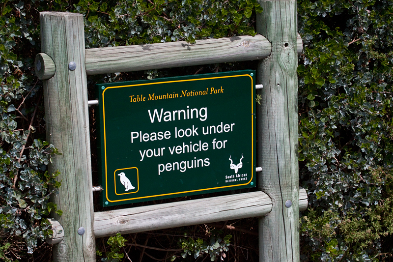 Look for Penguins, Boulders Beach, Table Mountain National Park, South Africa