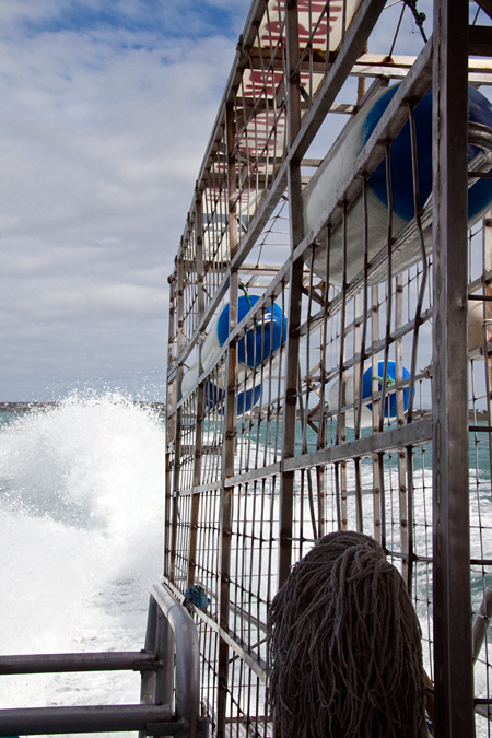 The Shark Dive Cage on Board, Shark Cage Diving in Kleinbaai, South Africa